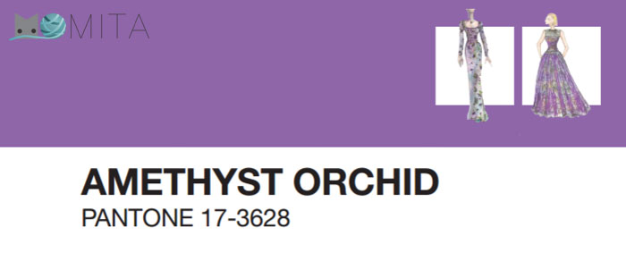 amethist-orchid